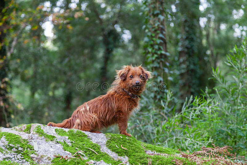 在冬天期间,失去或被放弃的小狗 免版税库存图片