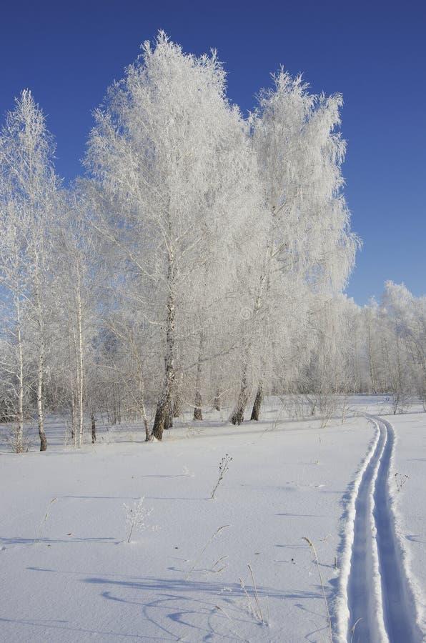在冬天木头的滑雪步行在晴天 库存图片