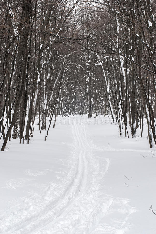 在冬天木头的滑雪轨道 库存图片