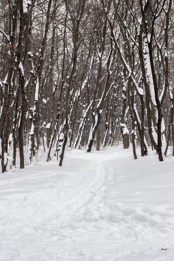 在冬天木头的滑雪轨道 免版税库存照片