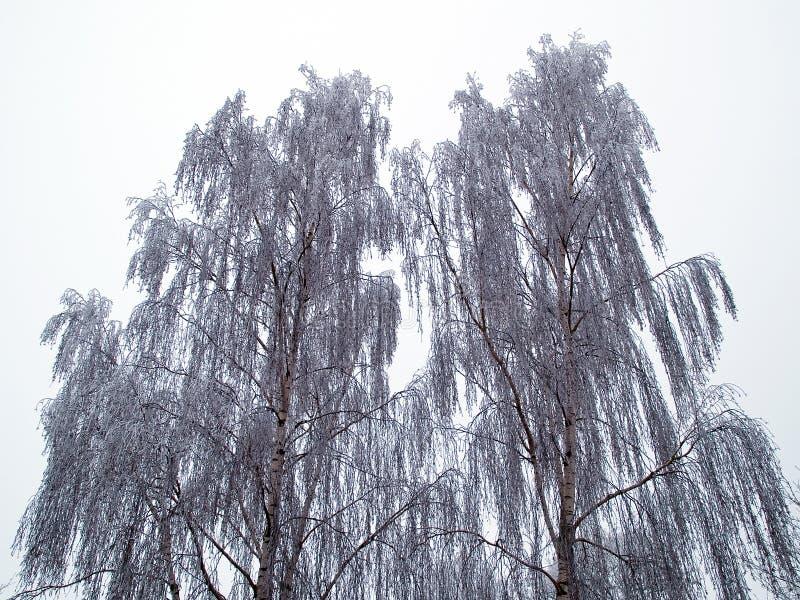 在冬天本质背景镜象的结构树 图库摄影