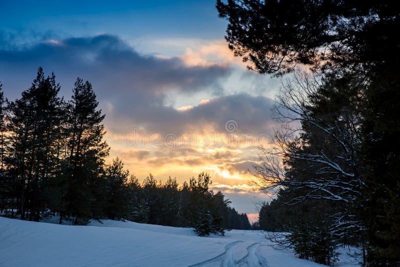 在冬天森林的好的日落天空 免版税库存图片