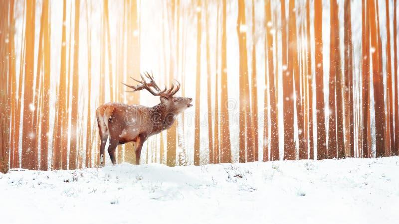 在冬天神仙的森林降雪的高尚的鹿 冬天圣诞节假日图象 冬天妙境 库存照片