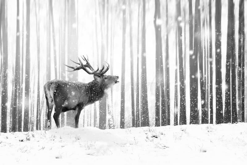 在冬天神仙的森林降雪的高尚的鹿 冬天圣诞节假日图象 冬天妙境 免版税库存图片