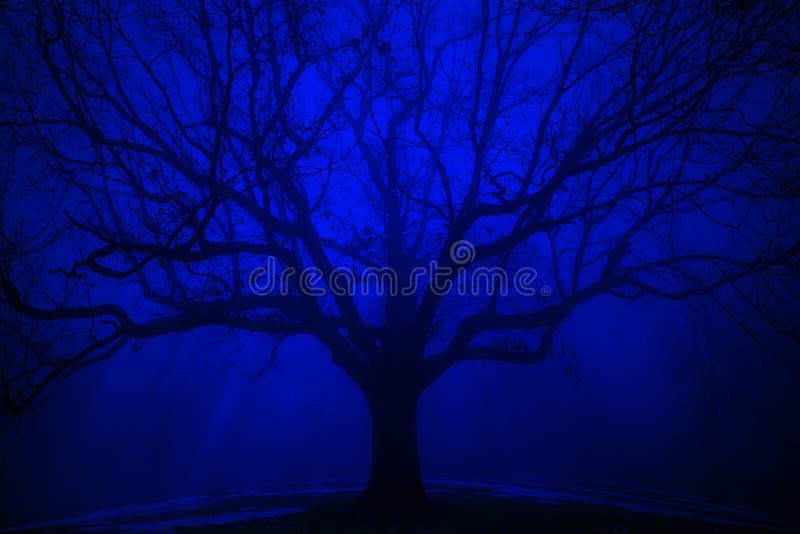 在冬天蓝色雾的超现实的树 免版税库存图片