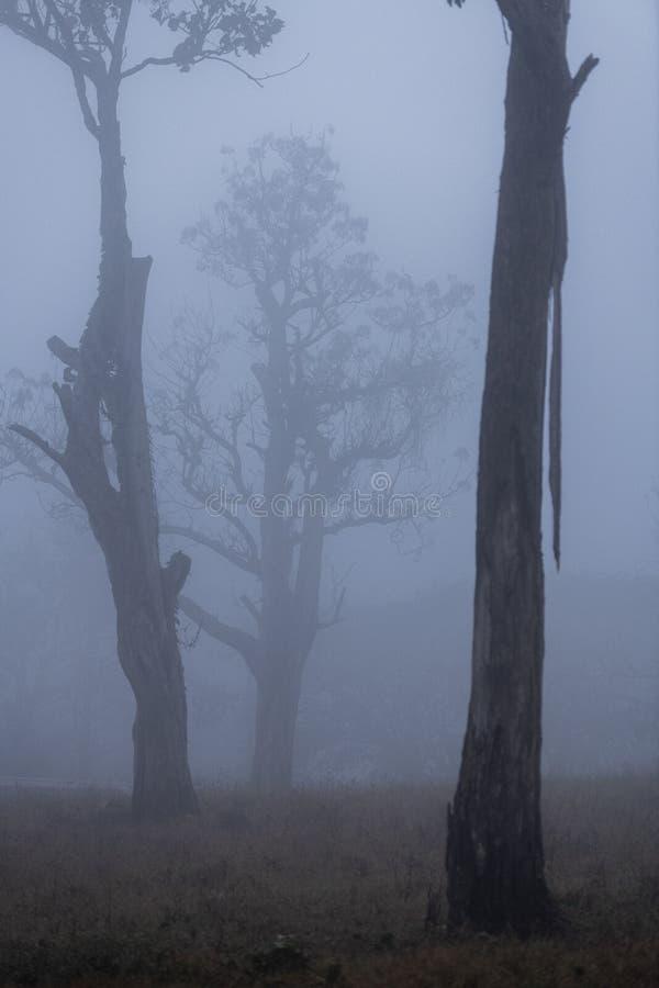 在冬天薄雾的贫瘠树在Mudumala老虎储备,Tamilnadu,印度 库存照片