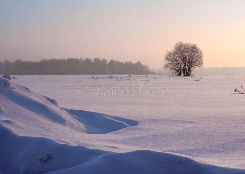 在冬天雪原的树 库存图片