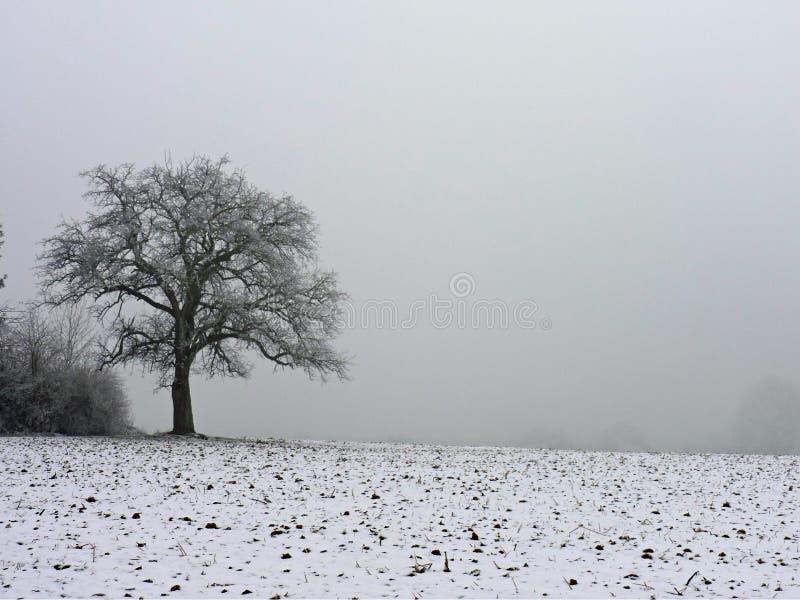 在冬天雾的偏僻的树 在木头结霜的露水在一个冷的周末期间 采取在Hohenwettersbach,德国 免版税库存照片