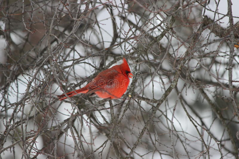 在冬天风暴的主要开会在树 库存照片