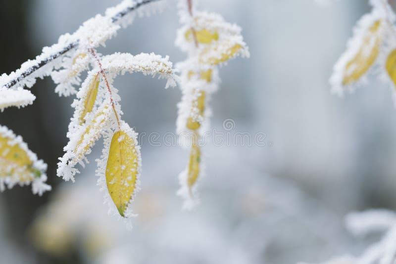 在冬天幻灯片运动的结霜的树枝 免版税库存图片