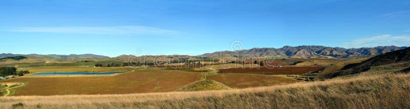 在冬天Awatere谷马尔伯勒新西兰的长相思Vinyards 库存图片