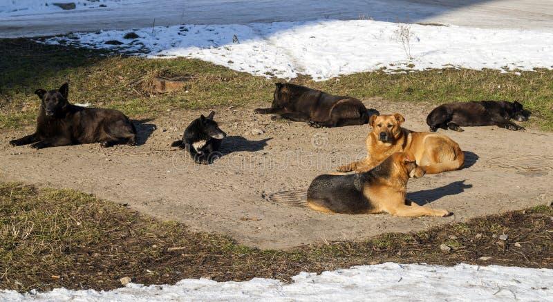 在冬时热化的无家可归的狗在sanitaryware井 迷路者 图库摄影