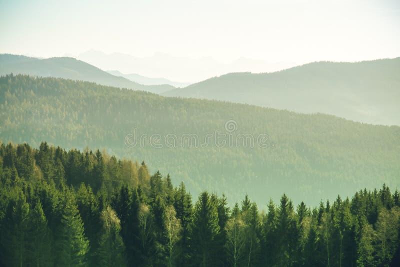 在冬时的一个明亮的晴天期间与云杉和杉树的山风景在奥地利阿尔卑斯 库存图片