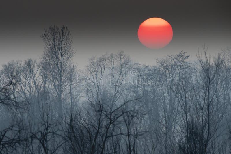 在冬时的日落 免版税库存图片