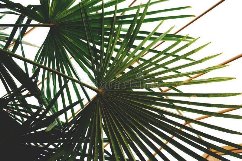 在冬景花园的绿色棕榈叶在房子里 免版税库存照片