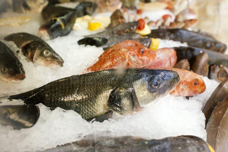 在冰变冷的鲜鱼在超级市场 冰待售鱼 海抓住在商店或市场上 海鲜和食物 健康饮食 免版税库存图片