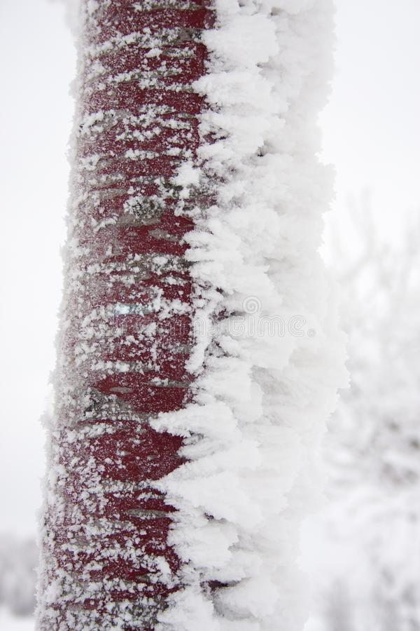 在冰层数的冻树干 库存照片