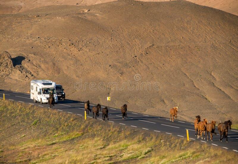 在冰岛的风景自然风景路的冰岛马  免版税库存照片