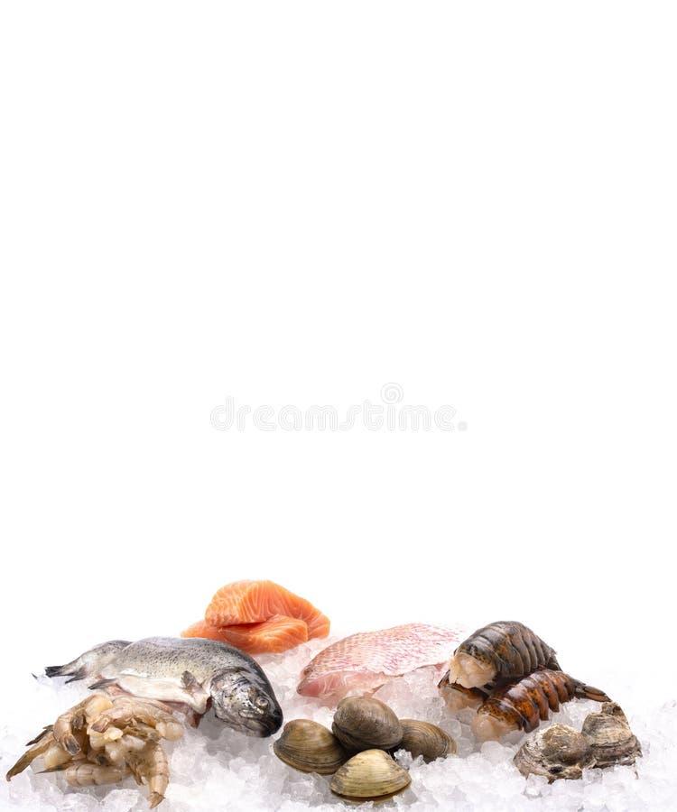 在冰床上计划的海鲜在鱼市或鱼贩子上 库存图片