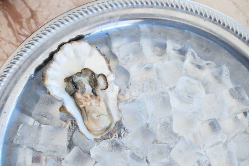 在冰格的新牡蛎谎言 图库摄影