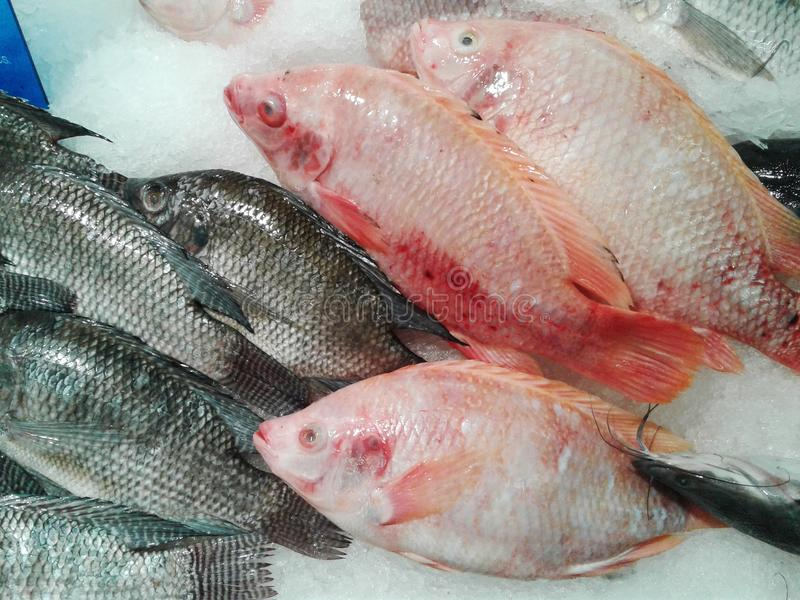 在冰桶的特写镜头新鲜的红色鱼 食物 购物车defocused前图象购物超级市场 向量例证