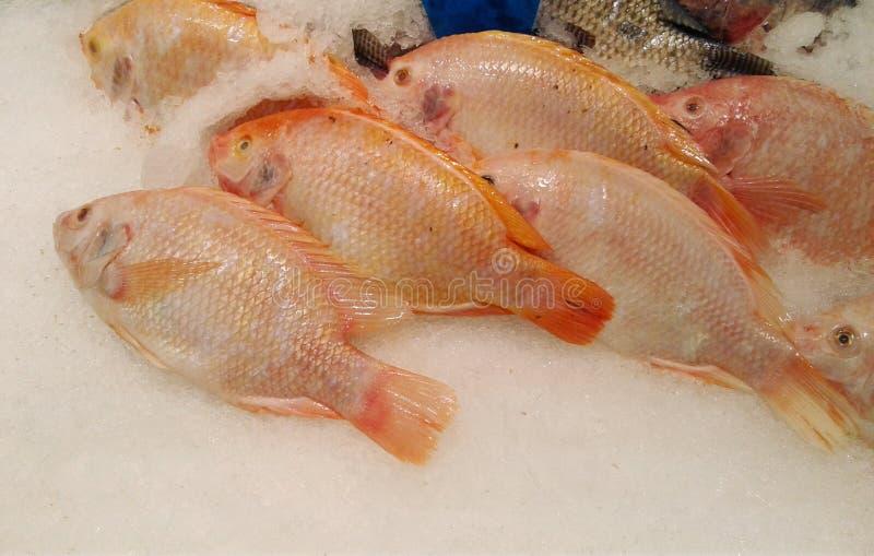 在冰桶的特写镜头新鲜的红色鱼 食物 购物车defocused前图象购物超级市场 库存照片