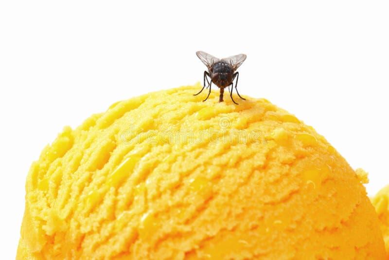 在冰淇凌的飞行 免版税库存照片