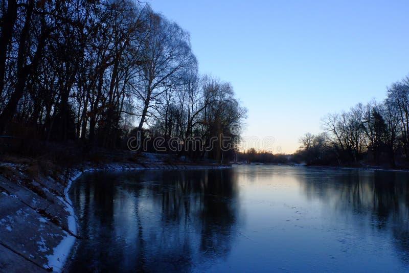 在冰湖的银行的树 免版税图库摄影