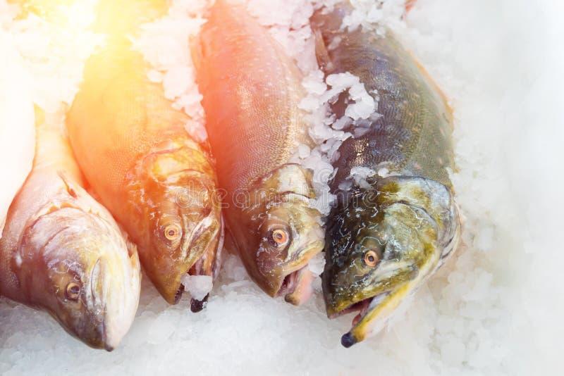 在冰的三文鱼 免版税库存照片