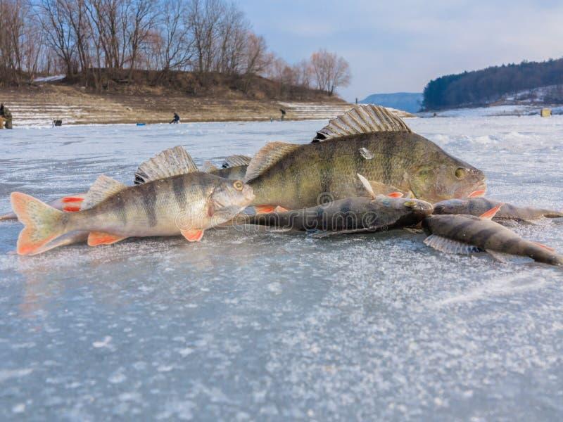 在冰的冬天捕鱼 免版税库存图片