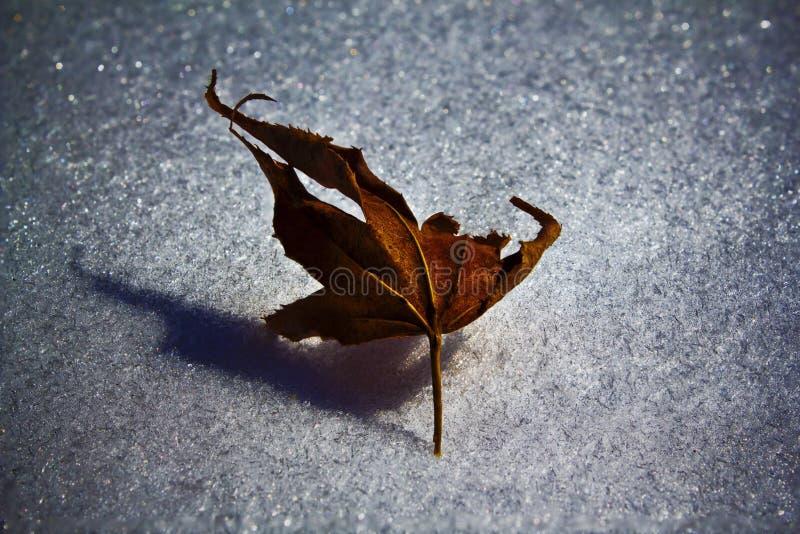 在冰的叶子 免版税库存图片