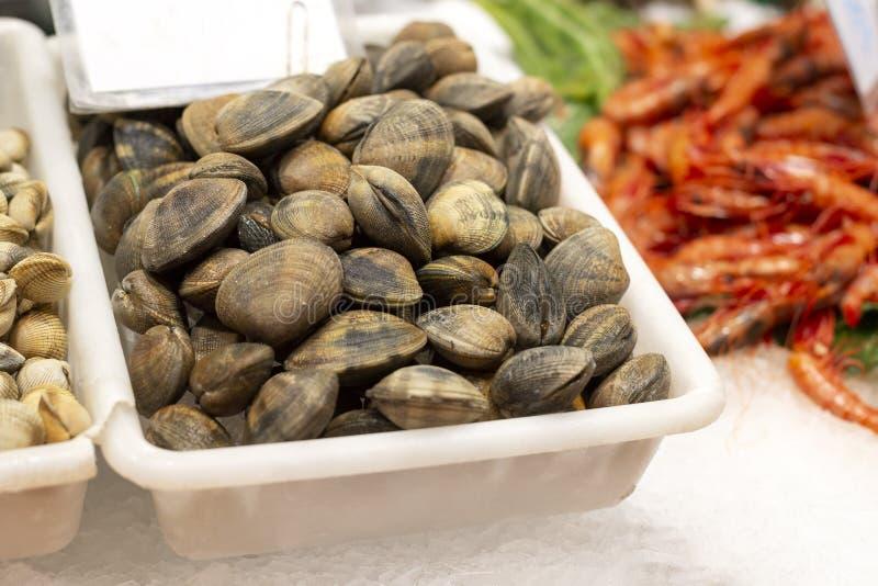 在冰的很多新鲜的蛤蜊在巴塞罗那上著名市场  库存照片