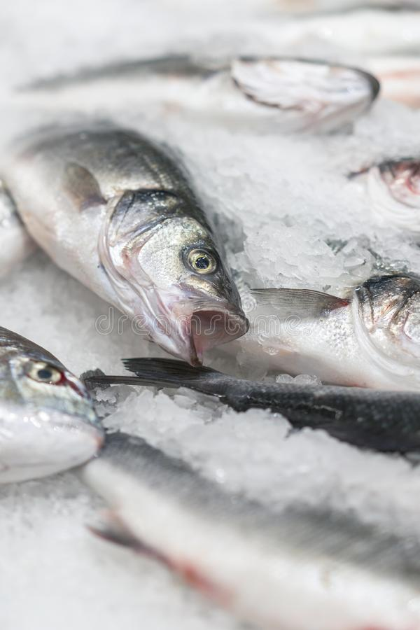 在冰的新鲜的变冷的海鱼 从海的鲜鱼在不是新鲜的冰的一张厚实的床上显示的市场的  免版税库存图片
