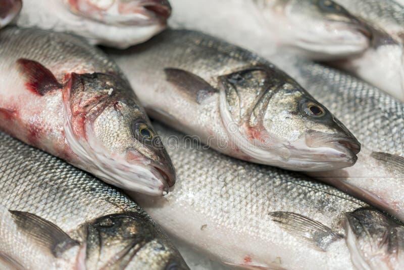 在冰的新鲜的变冷的海鱼 从海的鲜鱼在不熔化新鲜的冰的一张厚实的床上显示的市场的  免版税库存图片