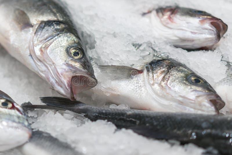 在冰的新鲜的变冷的海鱼 从海的鲜鱼在不熔化新鲜的冰的一张厚实的床上显示的市场的  免版税库存照片