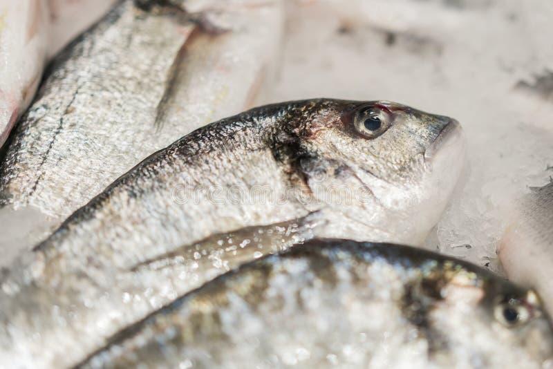 在冰的新鲜的变冷的海鱼 从海的鲜鱼在不熔化新鲜的冰的一张厚实的床上显示的市场的  库存照片