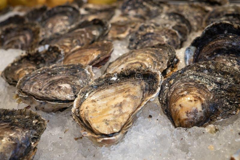在冰的新鲜的牡蛎待售在市场上 库存照片