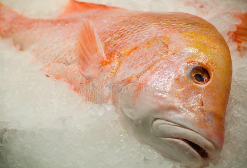 在冰的新鲜的红色皇帝鱼在鱼市上 免版税图库摄影