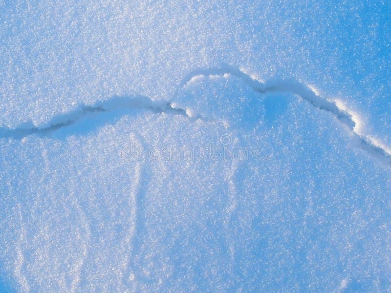 在冰的随风飘飞的雪 库存图片
