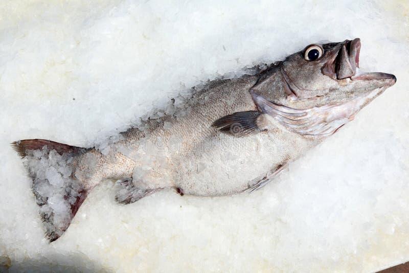 Download 在冰的鲈鱼 库存图片. 图片 包括有 厨房, 海运, 营养, 原始, 无须鳕, 可口, 烹调, 饮食, 膳食 - 22358837