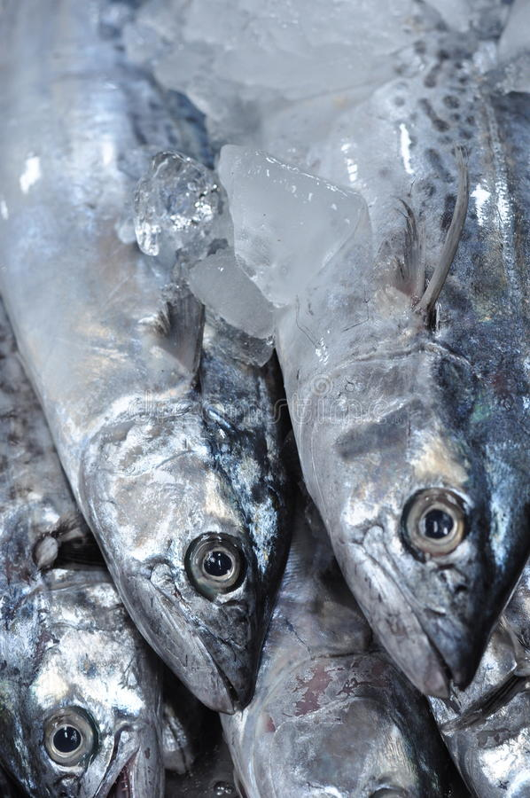 在冰的鲜鱼在市场上 免版税库存照片