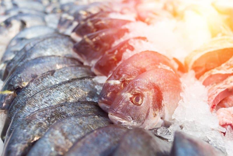 在冰的Dorado鱼 库存图片