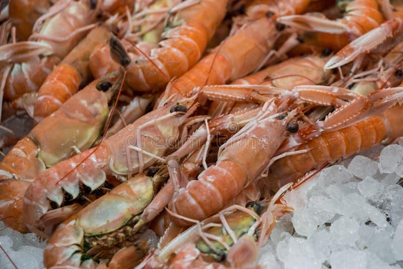 在冰的Scampi或海螯虾norvegicus在鱼购物 库存照片