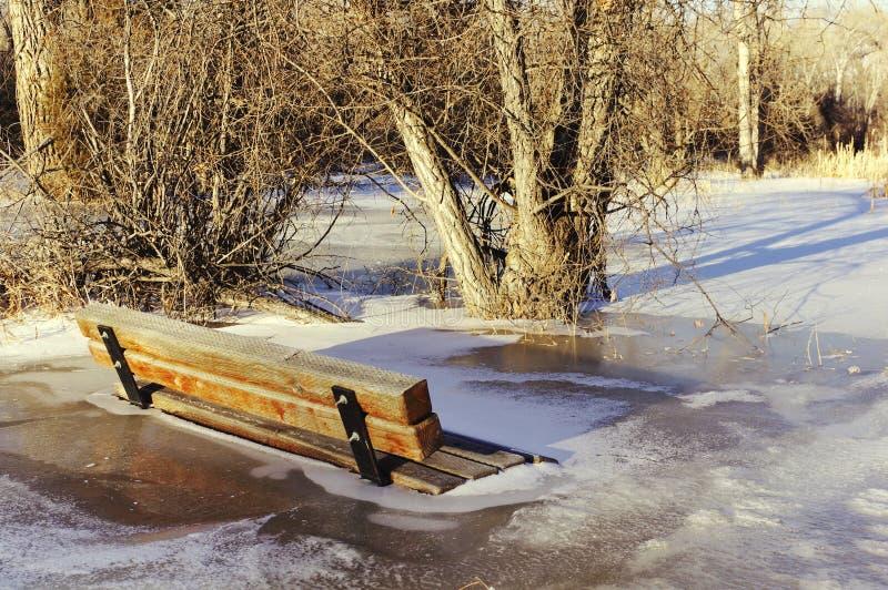 在冰结冰的公园长椅 免版税库存图片