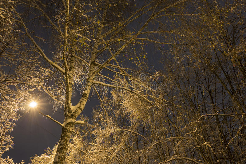 在冰雨期间结冰的树 库存照片