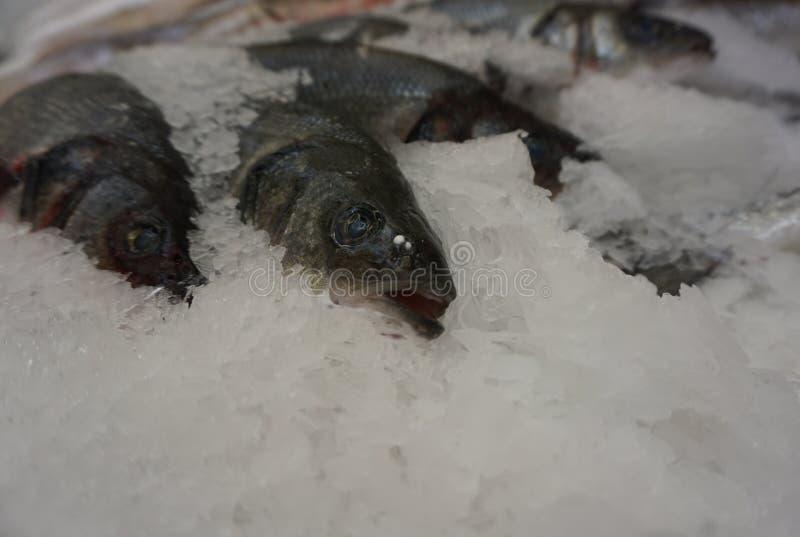 在冰面包屑的鲜鱼 库存图片