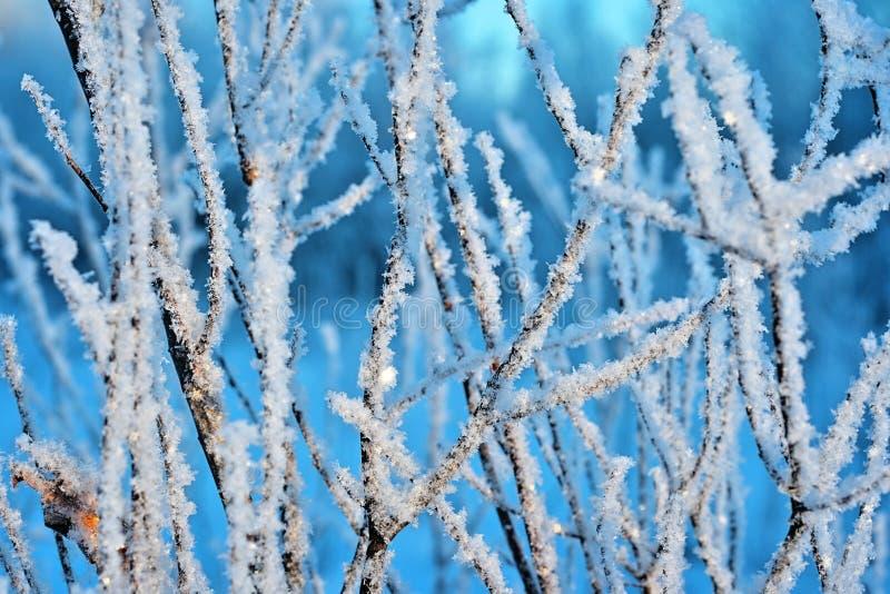 在冷淡的天气的分行 免版税库存图片
