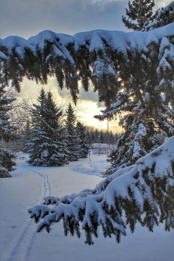 在冷漠的树枝后的阳光天空 库存照片