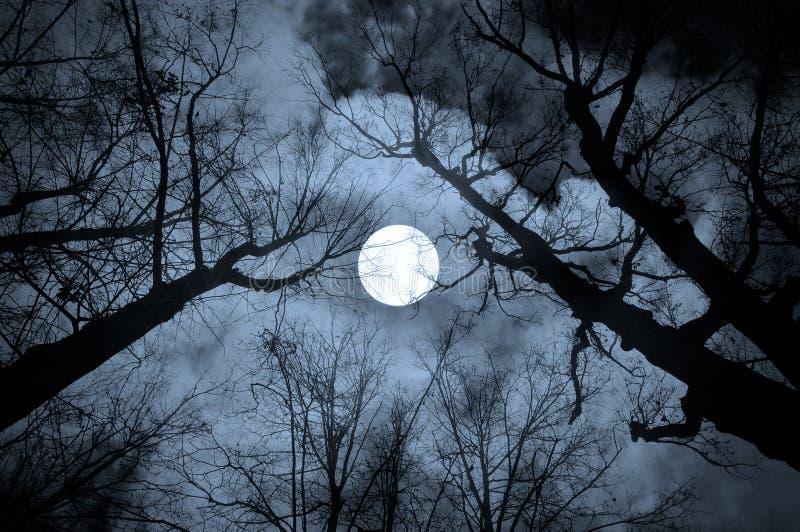 在冷的口气的夜神奇风景 库存照片