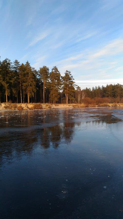 在冷的河附近的森林 免版税库存图片